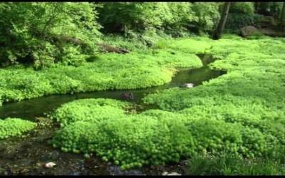 靜下心來聽聽流水的聲音,聽聽內心純淨的聲音!休息一下吧!