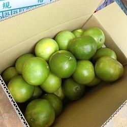 蜜柚 (20臺斤/箱)