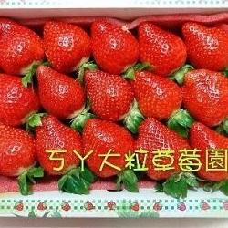 草莓禮盒(15粒裝)