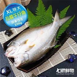 心饌午仔魚(XL)
