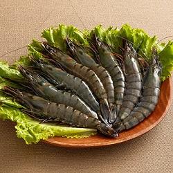 馬來西亞【粗放養殖】大草蝦